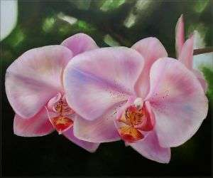 High Q. Hand Painted Oil Painting Two Lavender Orchids