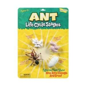 Insect Lore Life Cycle Stages Ant; 3 Items/Order:  Kitchen